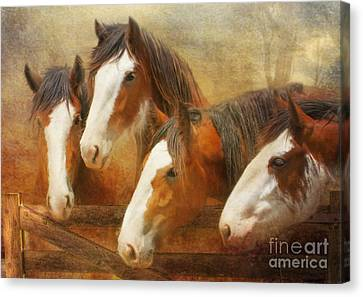 Faces Of Four Canvas Print