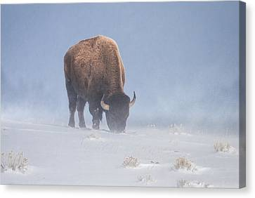 Canvas Print featuring the photograph Faces The Blizzard by Jack Bell