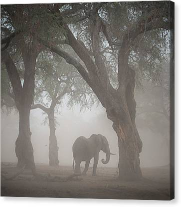 Elephants Canvas Print - Facing The Sandstorm by Giovanni Casini