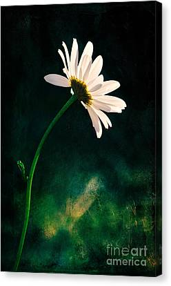 Facing The Sun Canvas Print