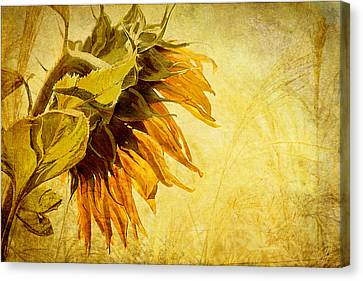 Fade Away Canvas Print by Margaret Hormann Bfa