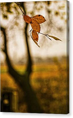 Fade Out Canvas Print by Odd Jeppesen