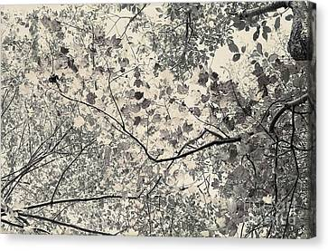 Faded Autumn Leaves Canvas Print by Ted Guhl