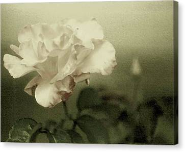Canvas Print featuring the photograph Faded Rose by Mary Wolf