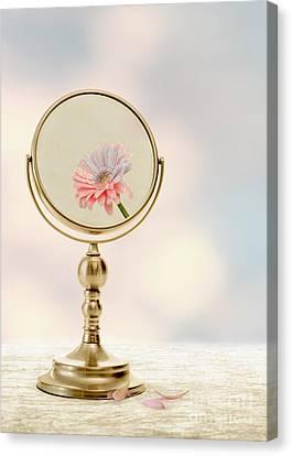 Flowers Gerbera Canvas Print - Fading Beauty by Amanda Elwell