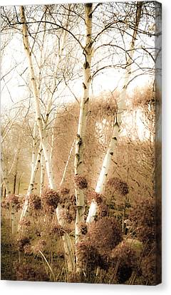 Fading Fall Canvas Print by Julie Palencia