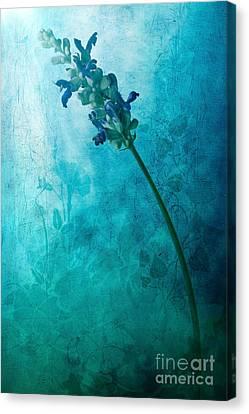 Flora Canvas Print - Fae by John Edwards
