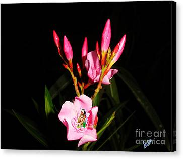 Fairy And Nerium Flower Canvas Print by Artist Nandika  Dutt
