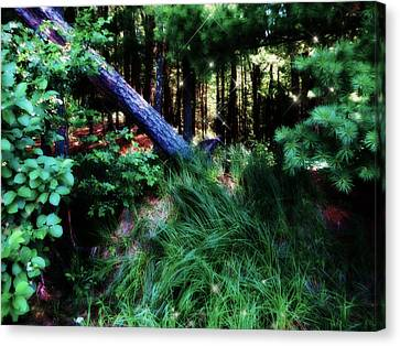 Canvas Print featuring the photograph Fairy Forest by Jamie Lynn
