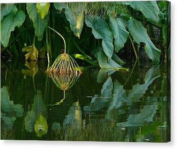 Canvas Print featuring the photograph Fairy Pond by Evelyn Tambour