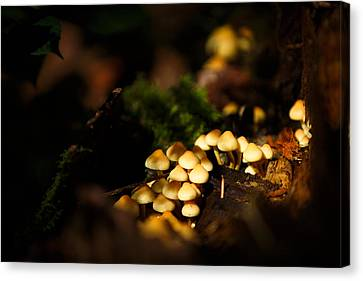Dappled Light Canvas Print - Fairy Village Fungi by Izzy Standbridge