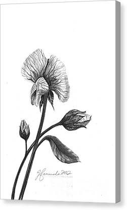 Faith Of A Flower Canvas Print by J Ferwerda
