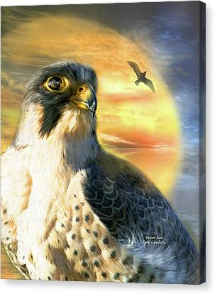 Falcon Sun Canvas Print by Carol Cavalaris