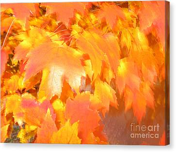Fall 1 Canvas Print