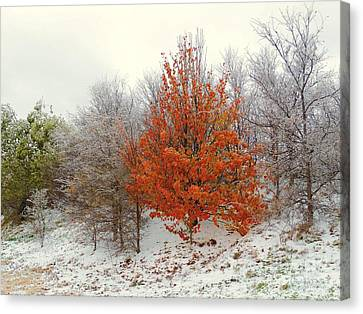 Fall And Winter Canvas Print by Robert ONeil