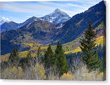 Fall At Cascade Peak And Sundance From Alpine Loop  Canvas Print