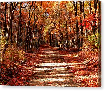 Canvas Print featuring the photograph Fall At Cheesequake by Raymond Salani III