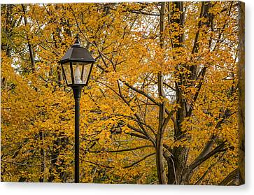 Fall At The Park Canvas Print by Celso Bressan