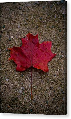 Fall Canvas Print by BandC  Photography