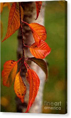 Fall Beauty Canvas Print by Sharon Elliott
