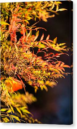 Canvas Print featuring the photograph Fall Berries by Mike Lee
