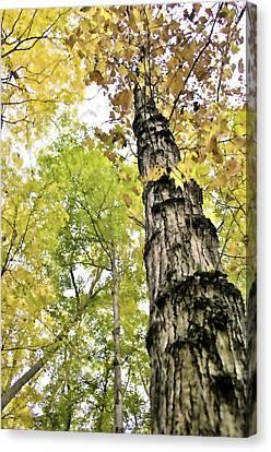 Fall Blur Canvas Print