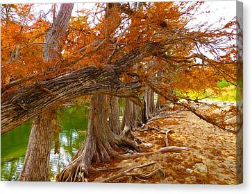Canvas Print featuring the photograph Fall Brilliance by David  Norman