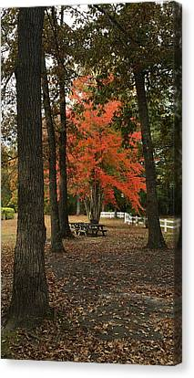 Fall Brings Changes  Canvas Print by Amazing Photographs AKA Christian Wilson