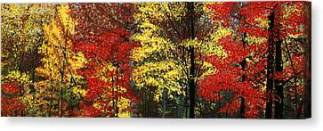 Fall Canopy Canvas Print