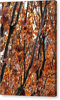 Fall Canvas Print by Celso Bressan
