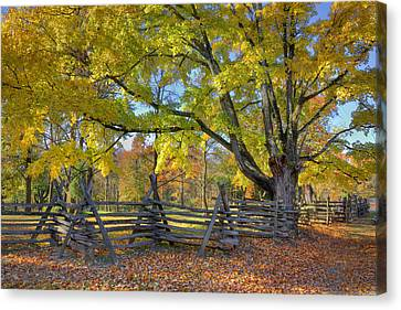 Canvas Print featuring the photograph Fall Color #2 by Wendell Thompson