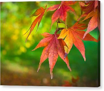 Fall Color Canvas Print by Jeff Klingler