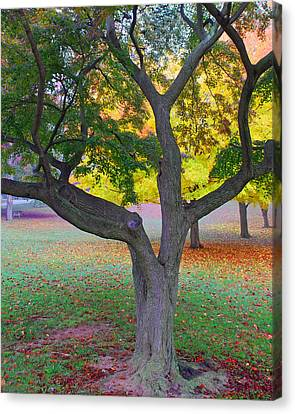 Canvas Print featuring the photograph Fall Color by Lisa Phillips