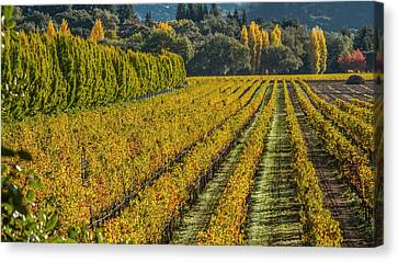 Grape Vines Canvas Print - Fall Color Napa Style by Bill Gallagher