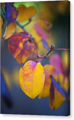 Fall Color Canvas Print by Stephen Anderson