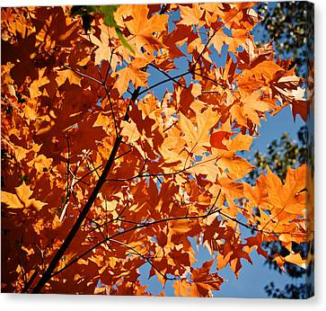 Fall Colors 2 Canvas Print by Shane Kelly