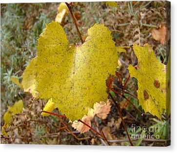 Fall Colors 6302 Canvas Print