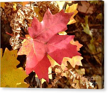 Fall Colors 6313 Canvas Print