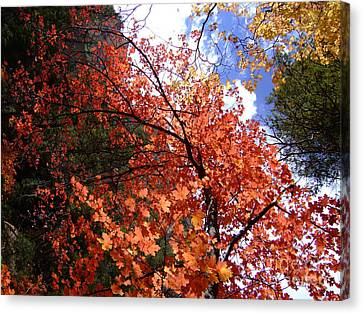 Fall Colors 6340 Canvas Print