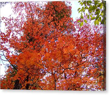 Fall Colors 6359 Canvas Print