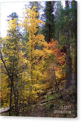Fall Colors 6368 Canvas Print