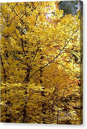 Fall Colors 6371 Canvas Print