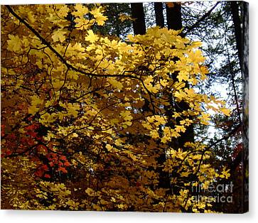 Fall Colors 6372 Canvas Print