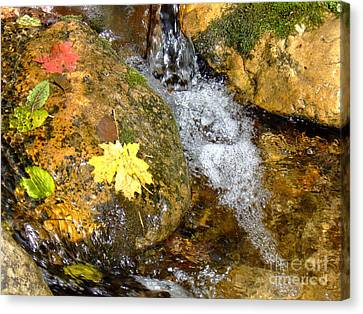 Fall Colors 6389 Canvas Print