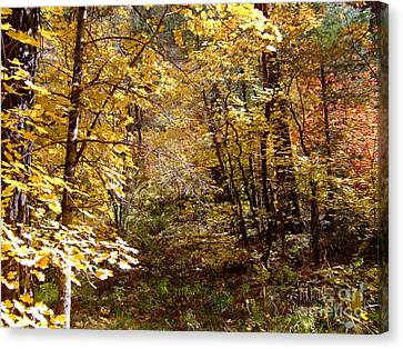 Fall Colors 6405 Canvas Print