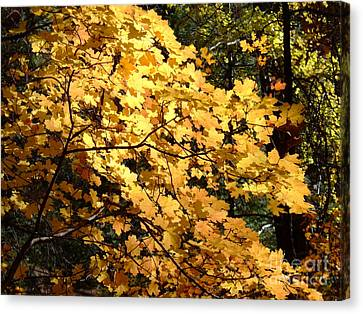Fall Colors 6407 Canvas Print
