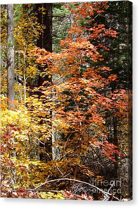 Fall Colors 6412 Canvas Print