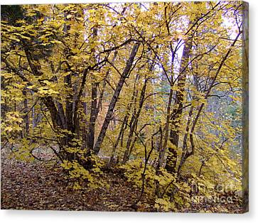 Fall Colors 6435 Canvas Print