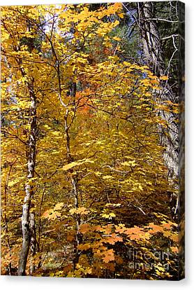 Fall Colors 6446 Canvas Print