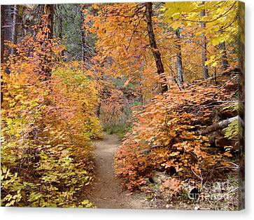 Fall Colors 6454 Canvas Print